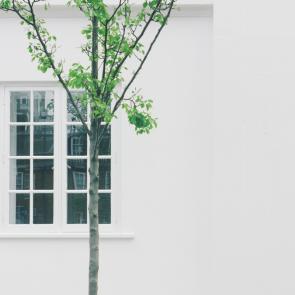 tree by window